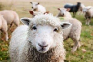 Begegnungen mit Tieren kommen auf der Sprachreise nicht zu kurz
