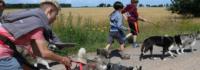 Hundeführung im Adventurecamp