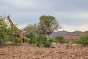 Auf deiner Sprachreise in Südafrika kannst du wilden Tieren ganz nah kommen