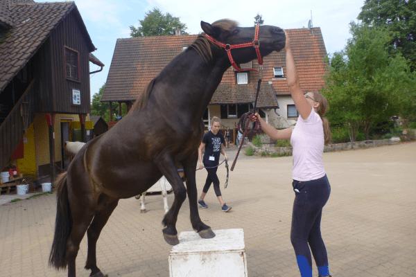 Pferd und Mädchen machen Kunststück