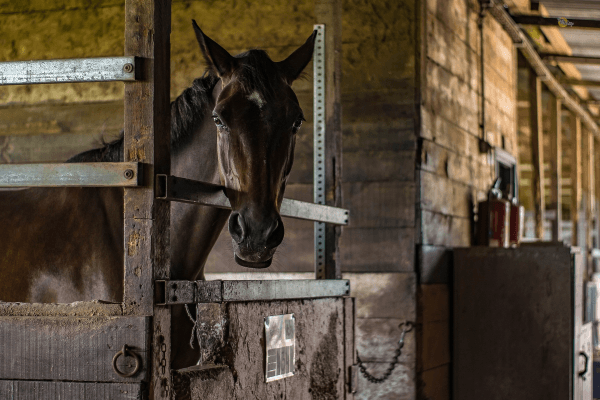 Pflege das Pferd in deinen Reiterferien