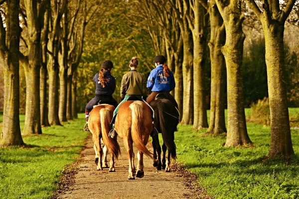 Reite die Pferde vom Reiterhof aus und erlebe tolle Reiterferien