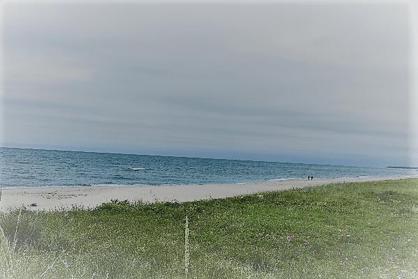 Wiese am Strand